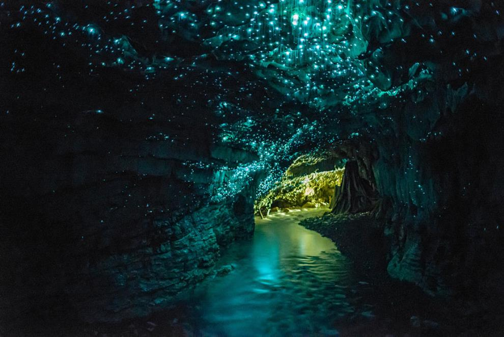 glow-worm-cave-new-zealand1