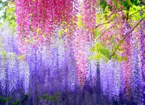 Kawachi-Fuji-Gardens-Japan-0