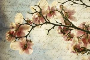 magnolia-memories