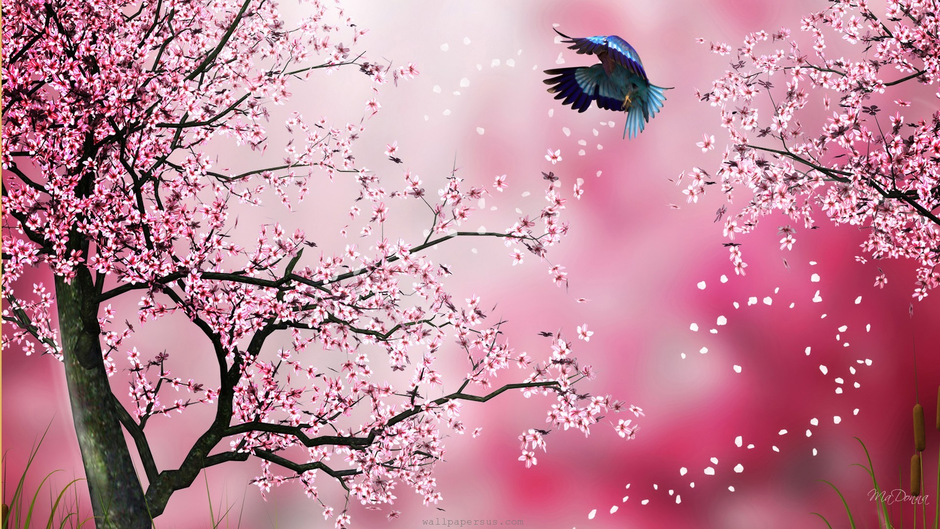 sakura-pink-abstract-blossoms-cherry-firefox-persona-flowers-japanese-