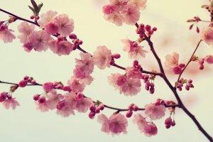 sweet_memories_by_pawelmatys-d5bjivj