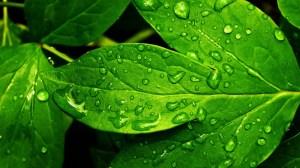 verde16