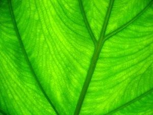 verde17