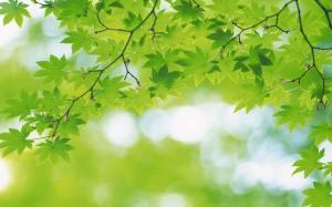 verde18