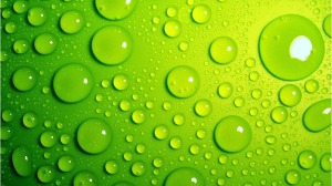 verde19
