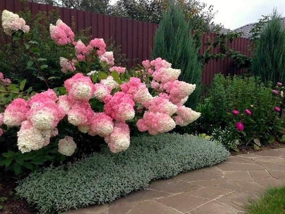 ГОРТЕНЗИЯ - gardenia.ru